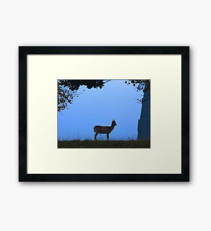 Fallow Deer #1 Framed Print