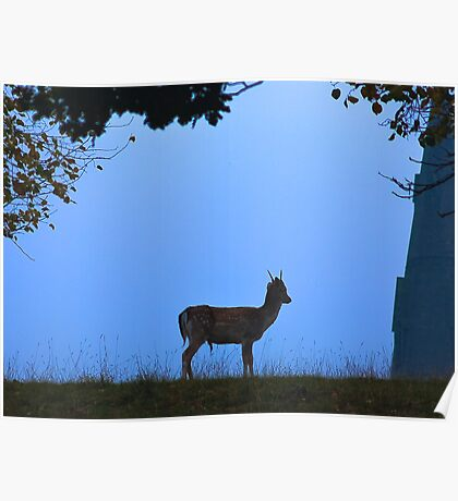 Fallow Deer #1 Poster