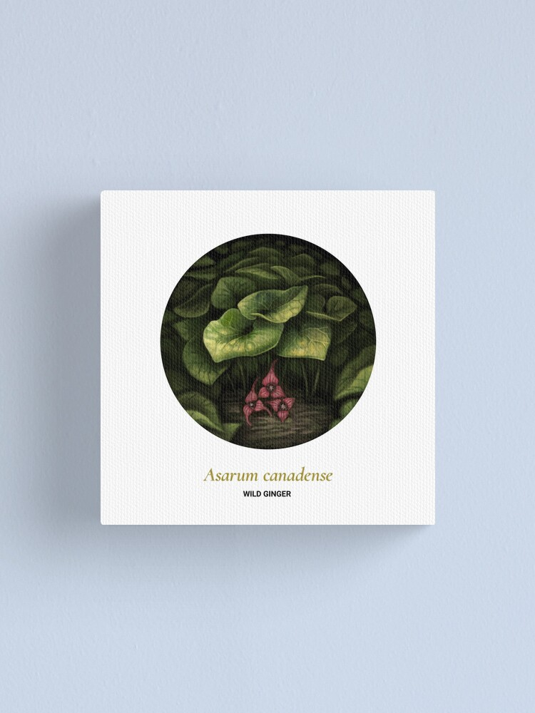 Alternate view of The Circles of Life: Wild Ginger Canvas Print