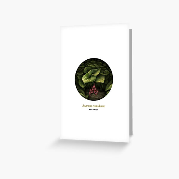 The Circles of Life: Wild Ginger Greeting Card