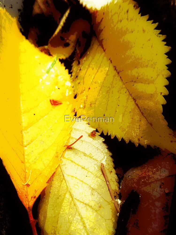 Natural Beauty Yellow Leaves by EvePenman