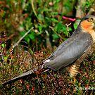 Sparrowhawk by Alexander Mcrobbie-Munro