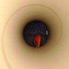 Peek A Boo by Sarah Jennings