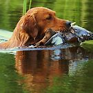 Dog 'n duck by Alan Mattison