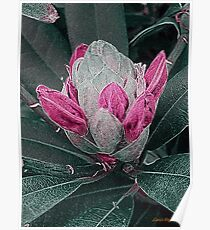 Flower Bud in Texture Poster