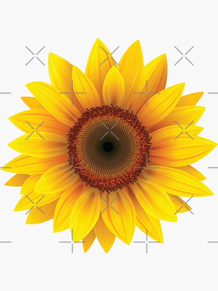 Cool Sunflower by lowpressures