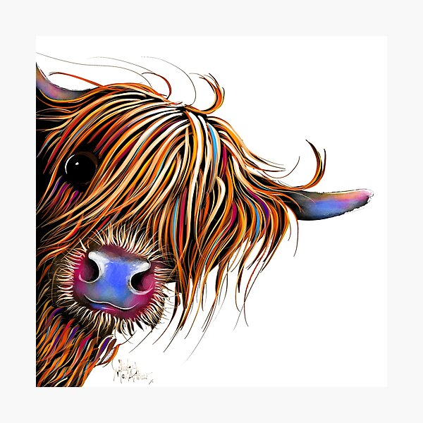 HiGHLaND CoW PRiNT SCoTTiSH ' SuGaR LuMP ' BY SHiRLeY MacARTHuR Photographic Print
