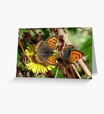 Small Copper (Lycaena phlaeas) Greeting Card