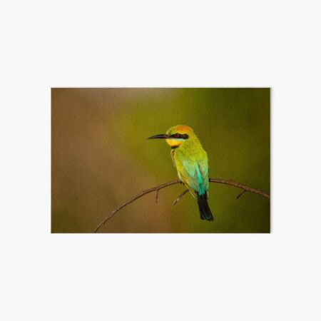 Rainbow Bee Eater, Northern Territory Art Board Print