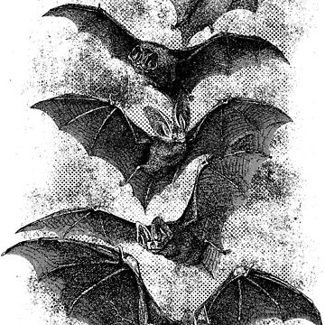Vintage Halloween Bat Etching by BrettHole