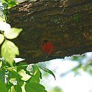 Peeking Out by laureenr