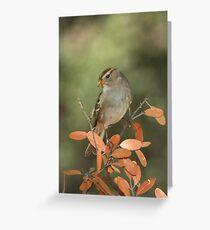 White-crowned Sparrow, immature Greeting Card