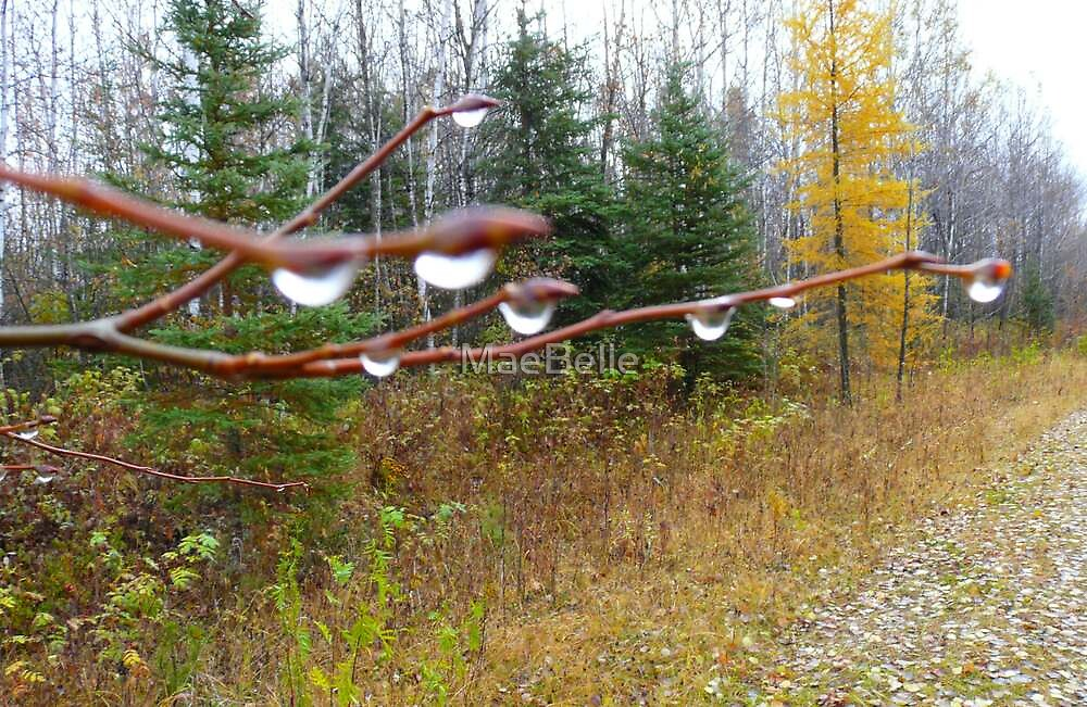 Rain Drops on Willows by MaeBelle