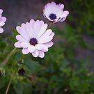 Beautiful flowers by Sunil Bhardwaj