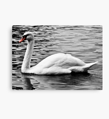 The Lonely Swan Canvas Print