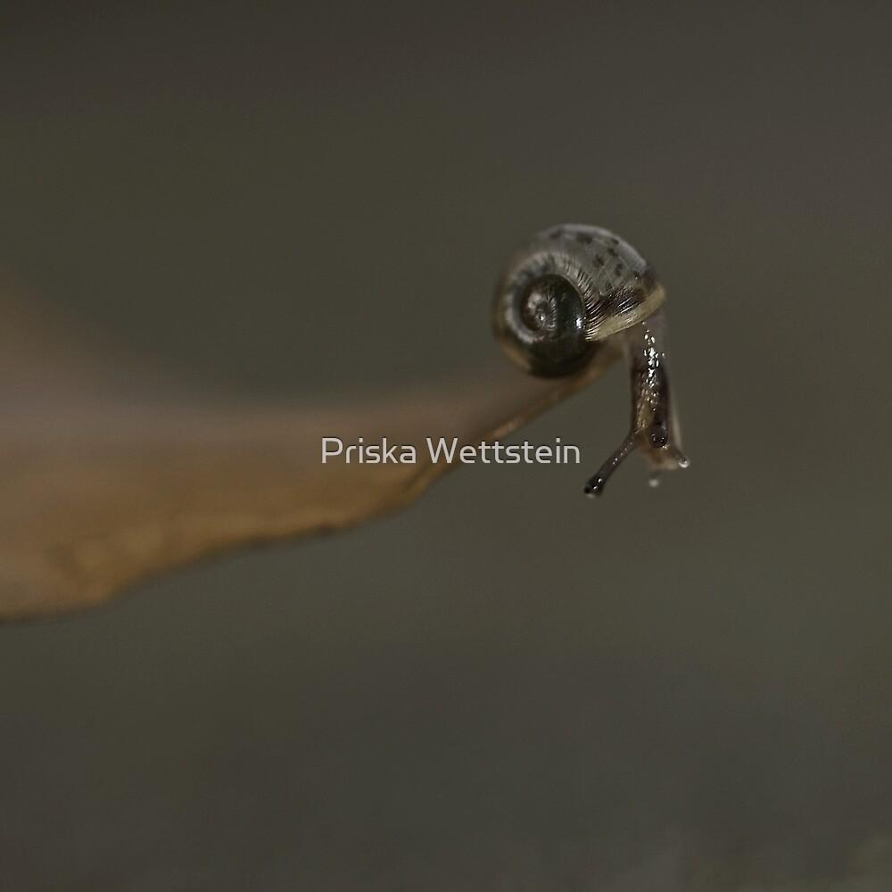 the edge of the world by Priska Wettstein