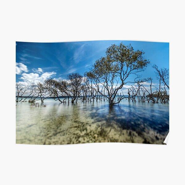 Mangrove paradise Poster