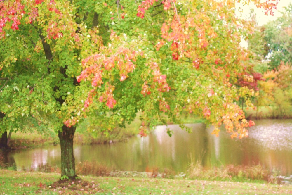 THE POND IN AUTUMN by Pauline Evans