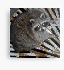 Raton laveur Impression métallique