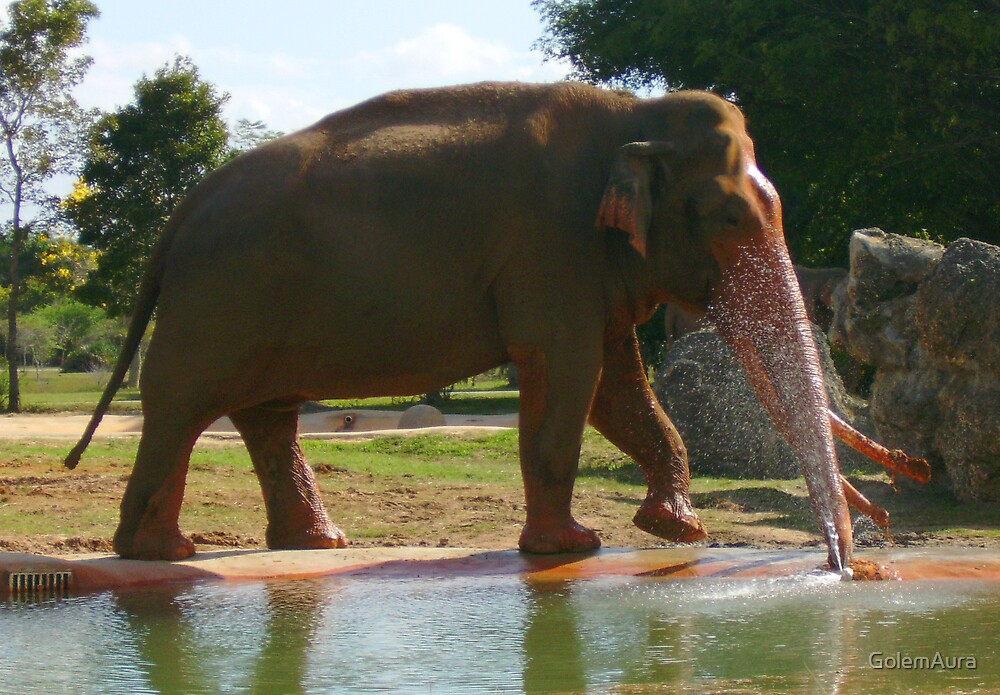 Elephant Fountain by GolemAura