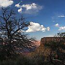 Tree at the Grand Canyon by Julia Washburn