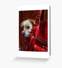 Not an Accessory...! Greeting Card