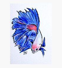 Art Doodle No. 33 Betta Fish Photographic Print