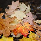 Leaves of Fall by mwfoster