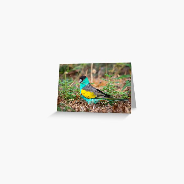 Hooded Parrot, Northern Territory Greeting Card