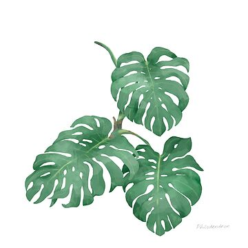 Philodendron - [Indoor Plant Love] by xJLe