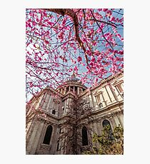 Spring under St Paul's Cathedral Photographic Print