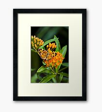 Butterfly on Flowers Framed Print
