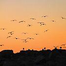 'Sunset Flight' by Scott Bricker