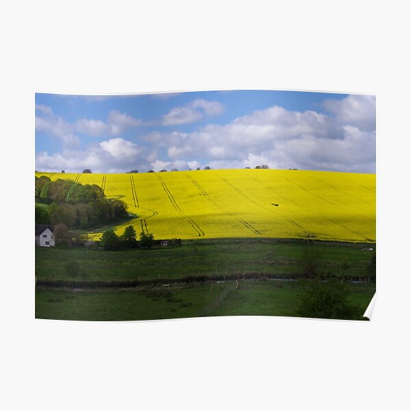 Rapeseed field in Wiltshire  Poster