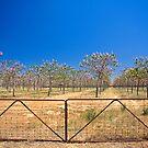 Treegate by Richard  Windeyer