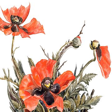 The poppy by anni103