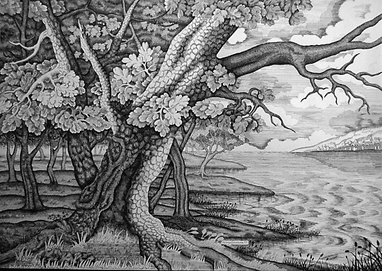 The Old Oak by Penny Edwardes