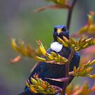 Magical Tui Looking At You by TomRaven