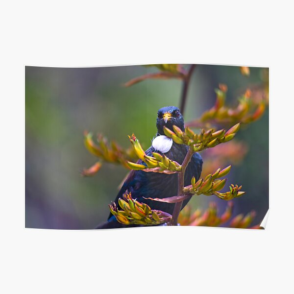 Magical Tui Looking At You Poster