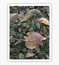 Frosted Leaves Sticker