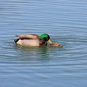 Ducks Do It In The Water by wingtong168