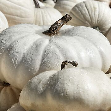 White Gourds & Pumpkins in the Morning dew! by Poete100