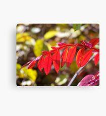 Autumn Brillance Canvas Print