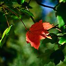 One Red Leaf by Phillip M. Burrow