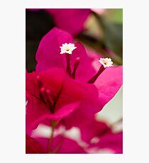 Scarlet Photographic Print