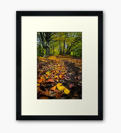 Golden Leaves of Autumn Framed Print