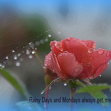 Rainy Days and Mondays........... by lynn45