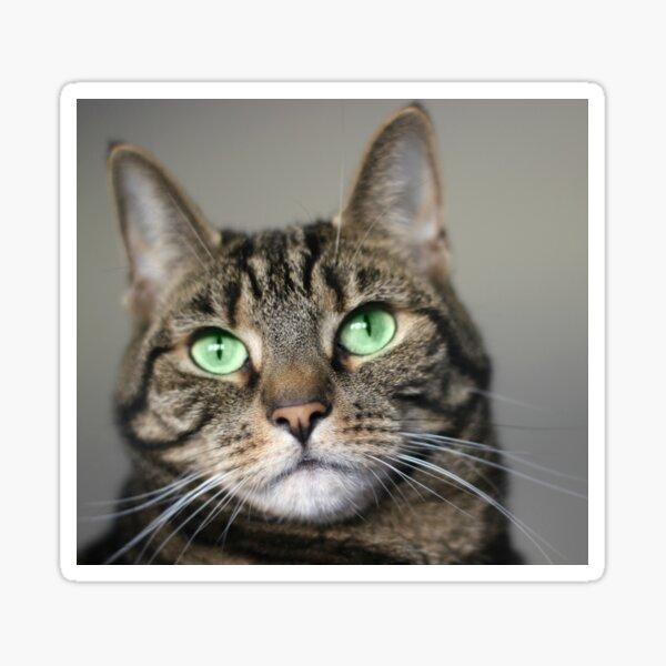 Tabby Beauty Green Eyes Sticker