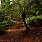 Hidden Forest  by John  Kowalski