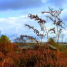 Dying Bracken - Autumn In The Peak District by mcworldent